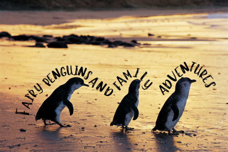 Visit Phillip Island fairy penguins